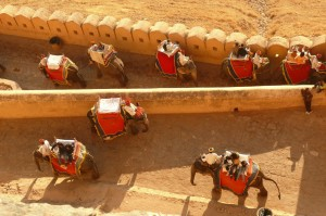 Elephant Ride Amber Fort Jaipur