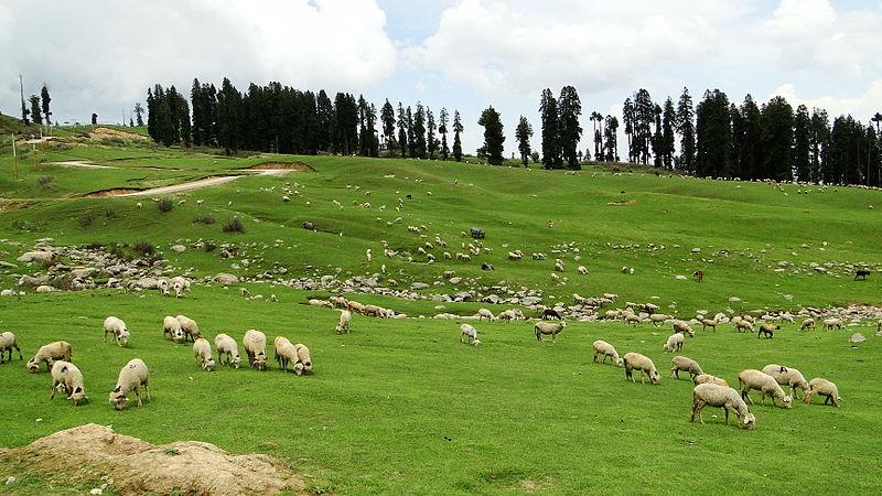 Doodhpathri, Kashmir