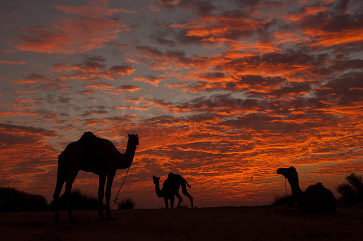 Night in the Thar Desert