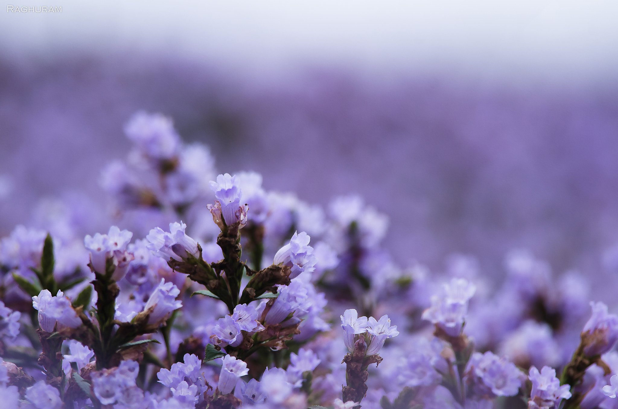 Blooming Season Munnar